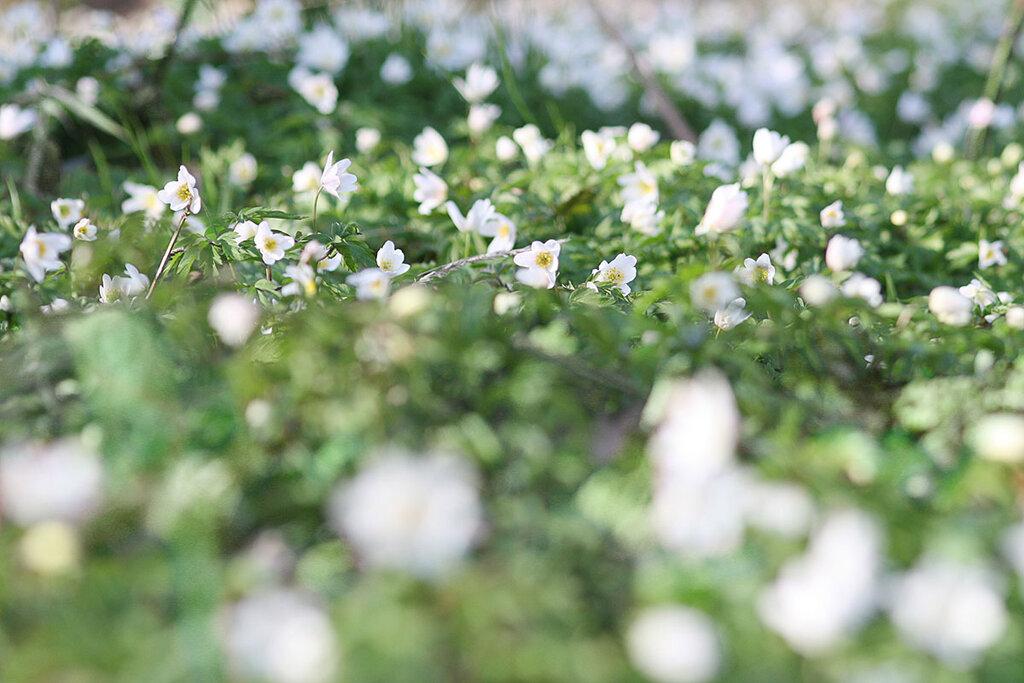 Billede med hvide blomster og sløret billede som bekymringer